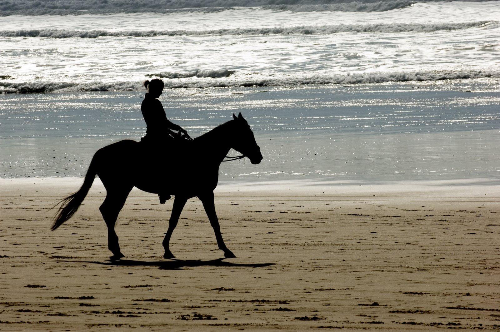 hittestress bij uw paard