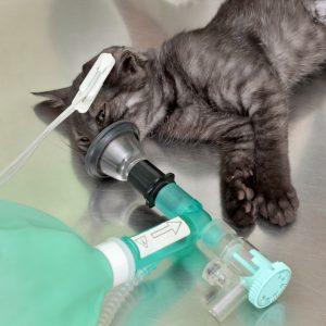 Ademhalingsproblemen bij uw kat