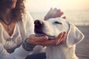 hittestress bij uw hond